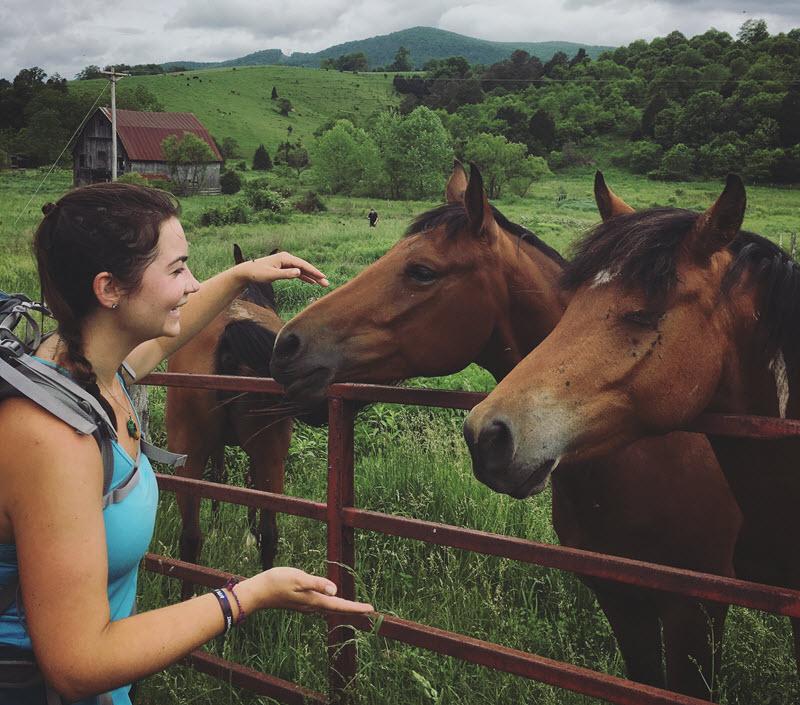 Appalachian Trail Horses