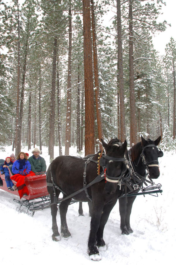 Paws Up Resort MT Sleigh Ride