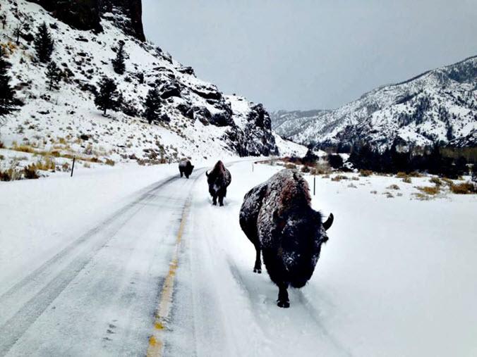 Snow road Buffalo N fork WY